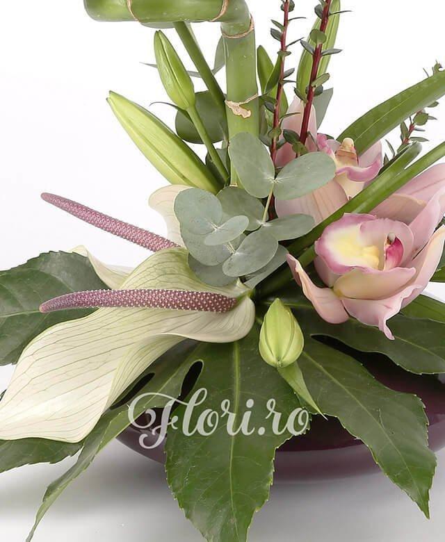 vas, 1 bambus, 3 anthurium alb, 1 cymbidium roz, 1 crin alb, eucalypt, aralia