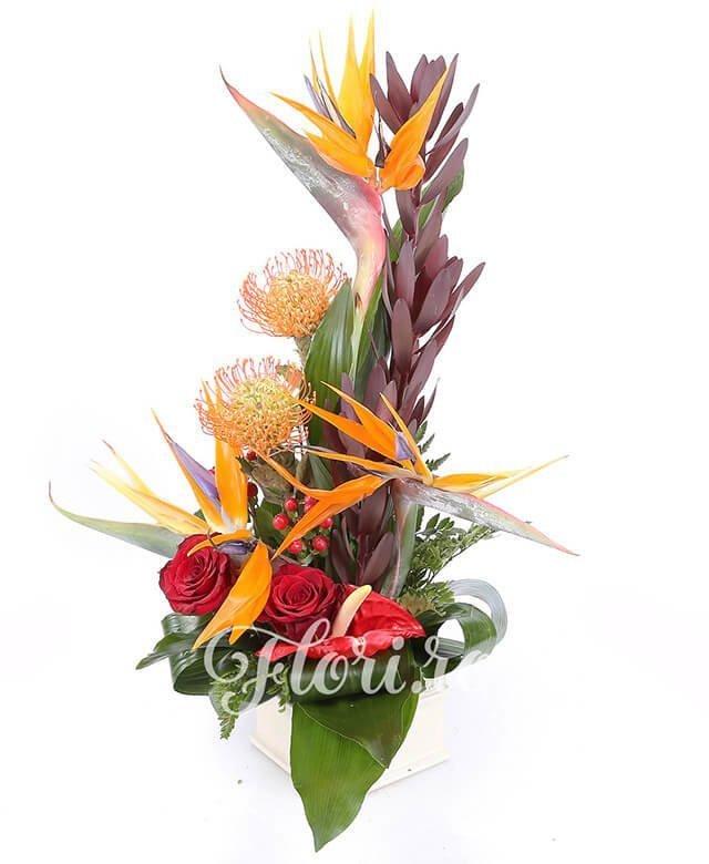3 strelitzia, 3 leucadendron, 2 leucospermum, 1 anthurium roșu, 2 trandafiri roșii, 3 hypericum roșu, aspidistra