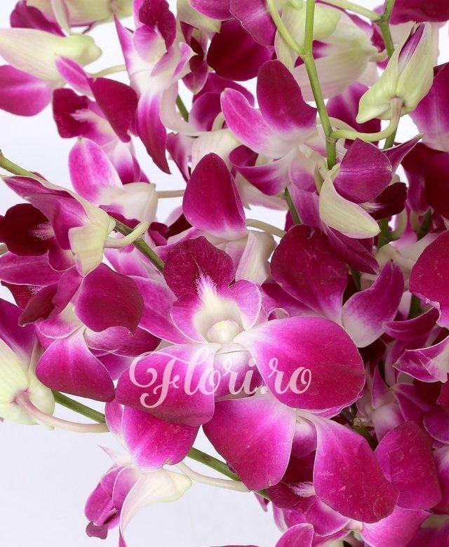 15 orhidee mov