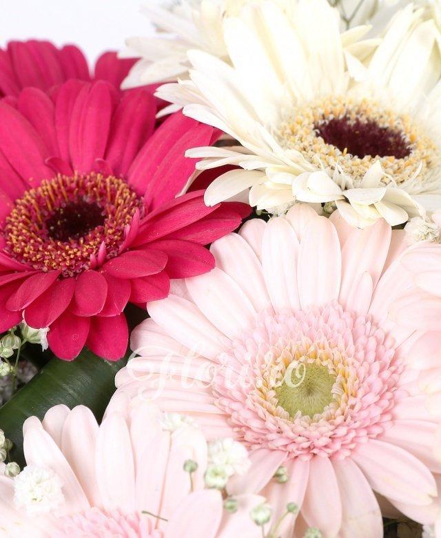 7 gerbera albă, 7 gerbera ciclam, 7 gerbera roz, gypsophila, verdeață