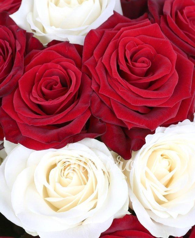11 trandafiri albi, 20 trandafiri roșii