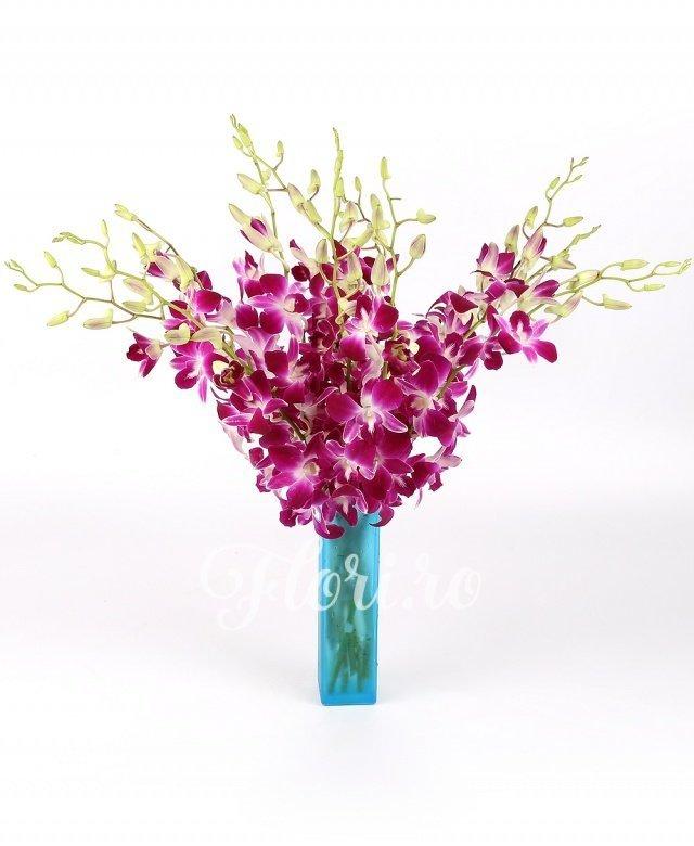 9 orhidee mov