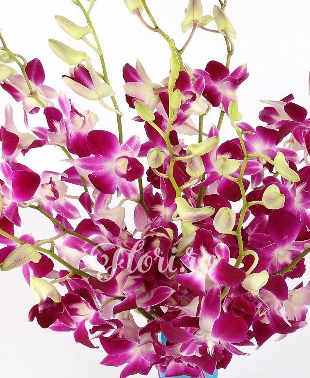9 orhidee dendrobium