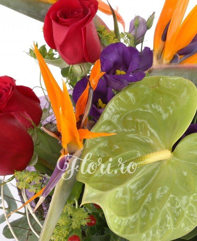 3 strelitzia, 3 trandafiri rosii, 2 anthurium verde, 3 hypericum rosu, 2 lisianthus mov, eucalypt, blupeurum, curly, cuib