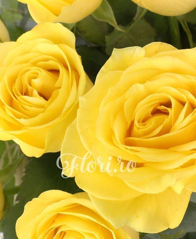 19 trandafiri galbeni, 5 eucalypt, 5 salal, cuib