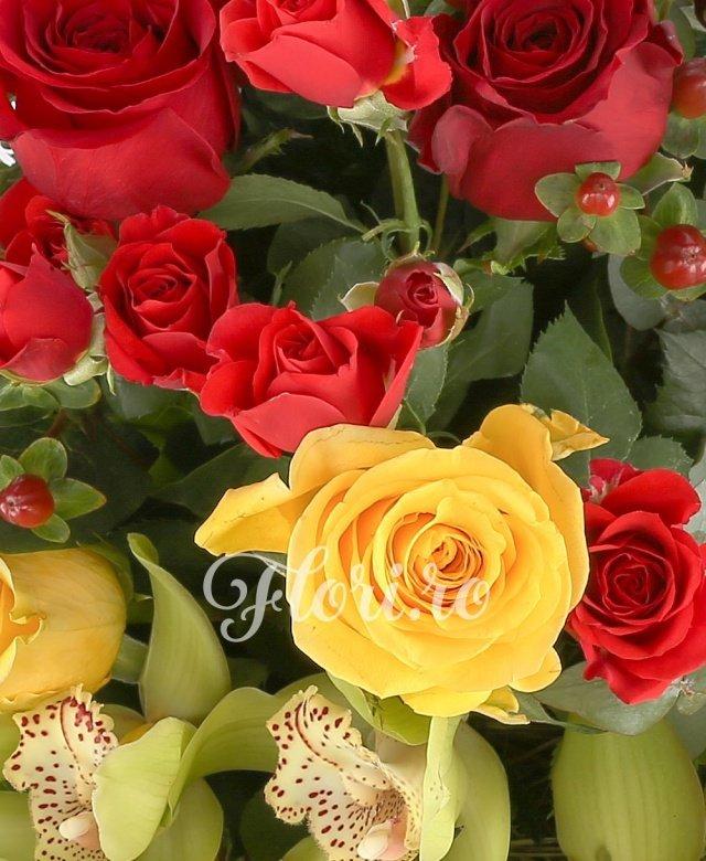 5 cupe cymbidium verde, 5 trandafiri galbeni, 3 solidago, 2 miniroze rosii, 5 trandafiri rosii, 1 burinia, 5 hypericum rosii, cuib