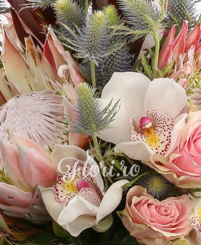 2 leucadendron rosu, 3 trandafiri roz, 2 eryngium, cymbidium, 2 proteaa rosie, 3 astilbe rosii, 2 gerbera roz, 5 salala, cuib
