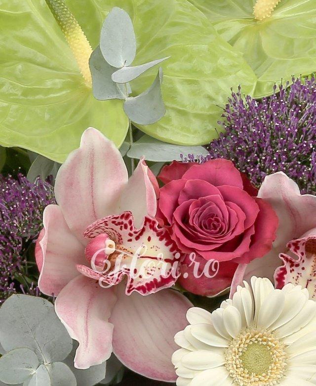 2 anthurium verde, 3 gerbera alba, 3 trandafiri ciclam, 2 trahelium mov, 3 cupe orhidee roz, 5 santini verde, 3 alstroemeria rosie, 2 frunze black tide, 2 eucalypt, 5 salal
