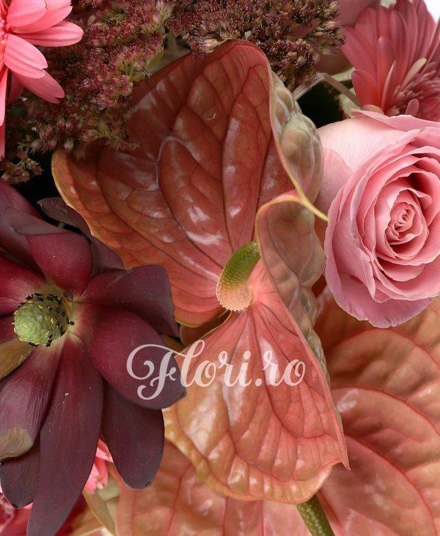 3 anthurium maro, 5 trandafiri roz, 2 leucadendron, 5 cupe orhidee grena, 3 gerbera roz, 2 sedum, 3 eucalypt