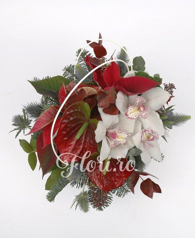 1 cymbidium alb, 2 anthurium roșii, poisenția, brad, verdeață, vas