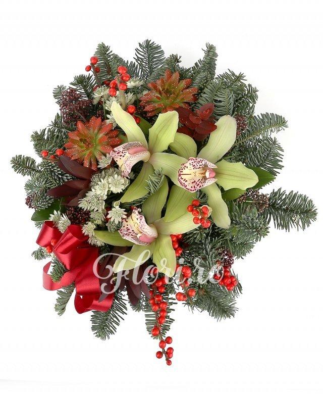 cymbidium verde, ilex, 2 echeveria roșii, 2 leucadendron roșu, 2 schimia, astranția albă, brad, verdeață, vas