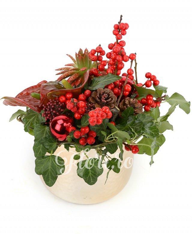 2 ilex, 1 echeveria, 2 anthurium roșii, 1 schimia, conuri, globuri, verdeață