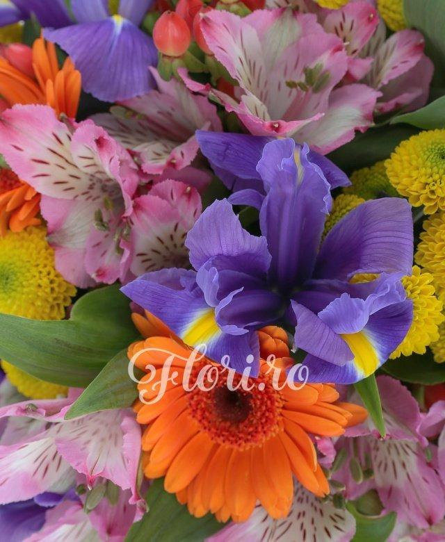 5 gerbera portocalii, 5 alstroemeria roz, 4 santini galben, 5 iris mov, 5 frezii albe, hypericum, salal, feriga