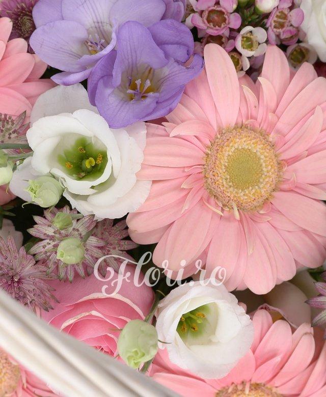 6 gerbera roz, 5 santini roz, 5 trandafiri roz, 4 lisianthus alb, astrantia grena, 5 frezii mov, cymbidium grena, cymbidium alb, waxflower, salal, cos