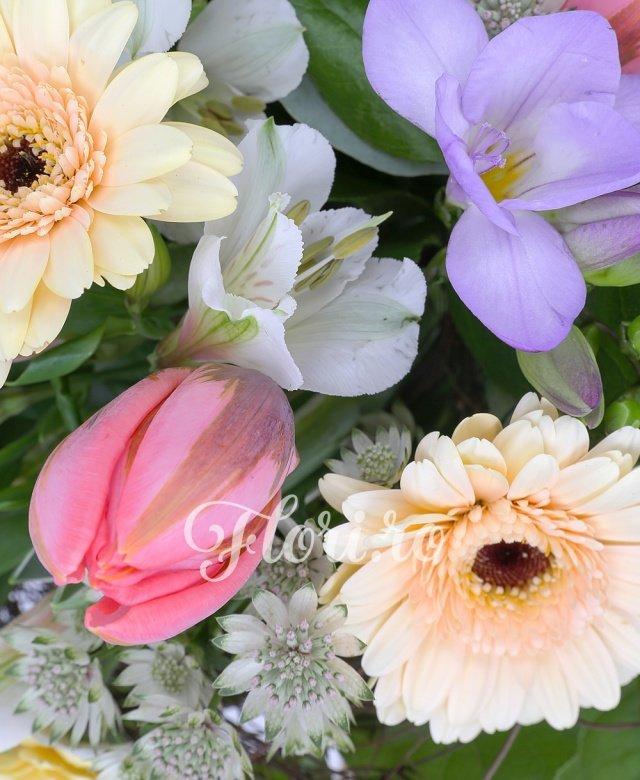 3 gerbera crem, 4 lalele roz, 2 frezii mov, 2 alstroemeria albă, astranția albă, verdeață