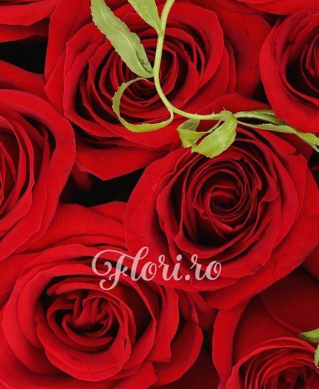 13 trandafiri rosii, tillandsia, cutie