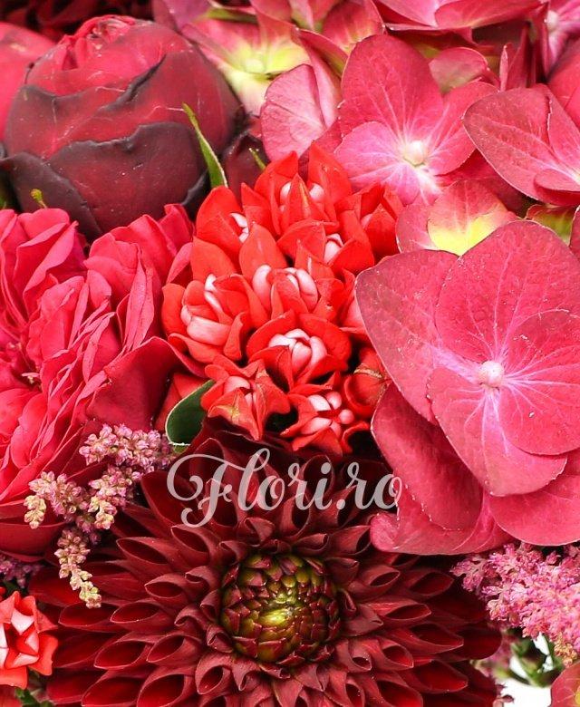3 hortiensii rosii, 7 dalii grena, 10 bouvardia rosii, 10 astrantia rosii, 5 trandafiri piano rosu