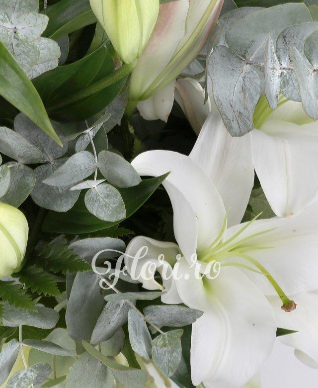 5 crini imperiali albi, verdeață