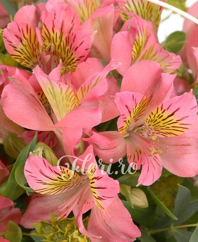 19 alstroemeria roz, verdeață