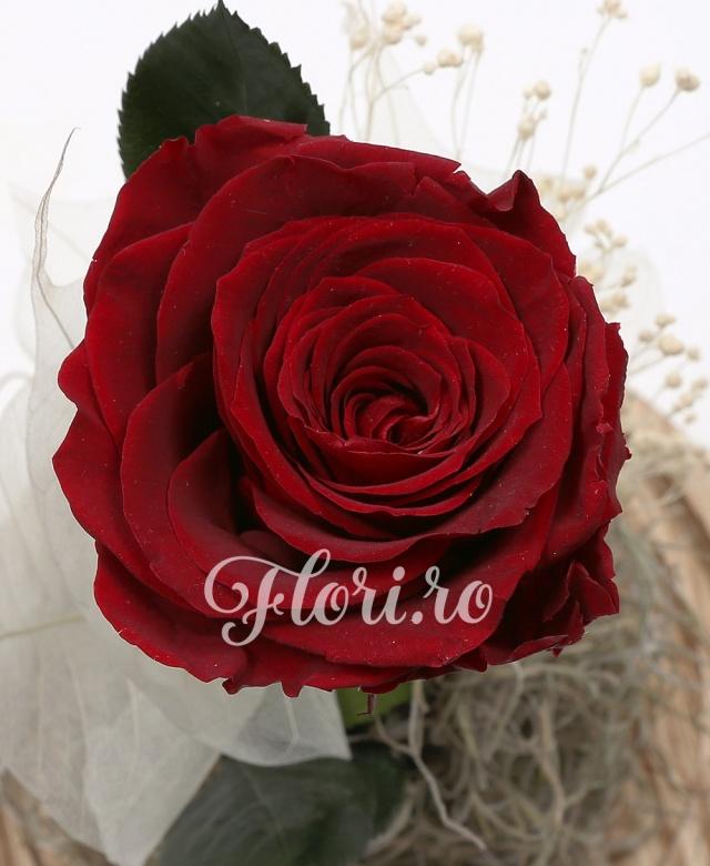 1 trandafir roșu criogenat, cupola sticlă