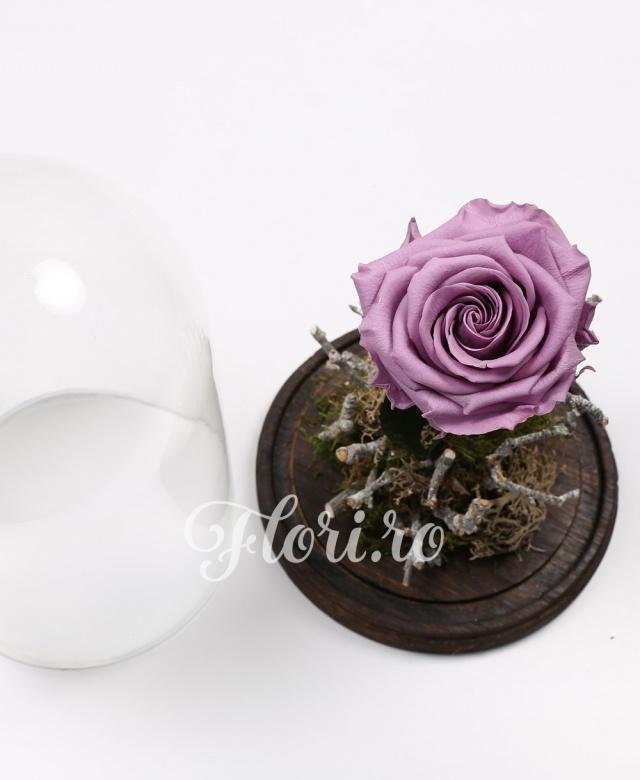 1 trandafir criogenat mov, cupolă sticlă