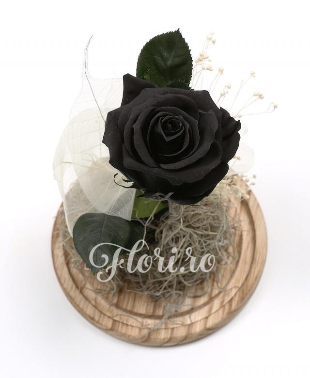 1 trandafir criogenat negru, cupolă sticlă