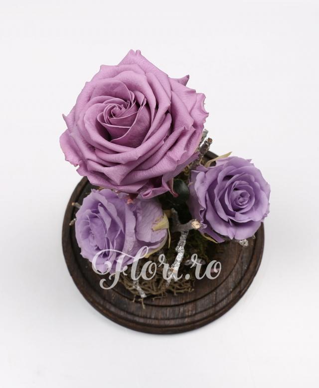 3 trandafiri criogenați mov, cupola de sticlă