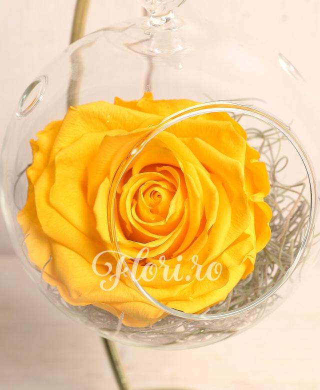 1 trandafir criogenat galben in glob de sticla