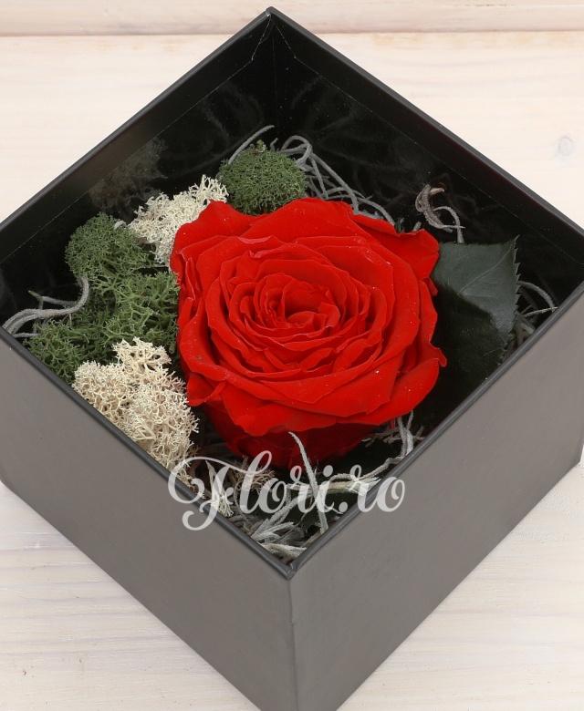 1 trandafir roșu natural - criogenat în cutie cadou