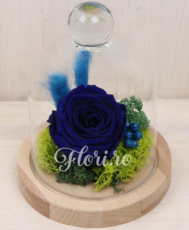 1 trandafir criogenat albastru, plante decorative criogenate, cupolă de sticlă și suport din lemn