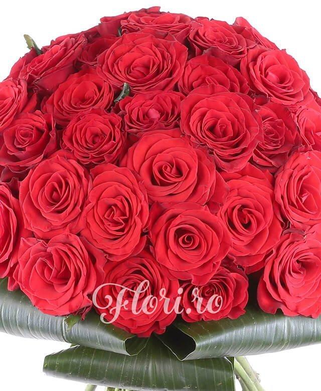 33 trandafiri rosii, aspidistra