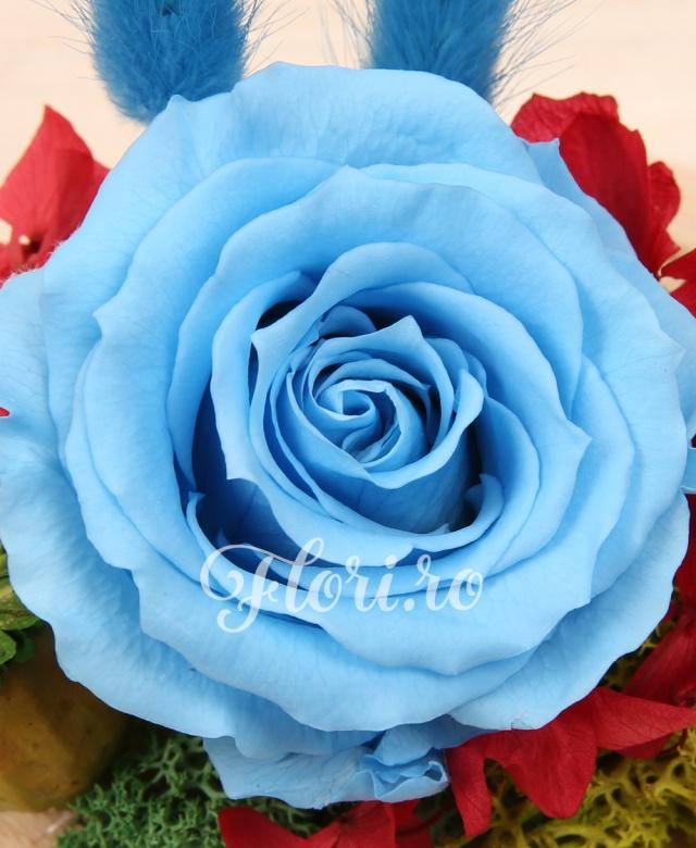 1 trandafir criogenat bleu, hortensia criogenată, mușchi criogenat, cupolă sticlă și suport lemn