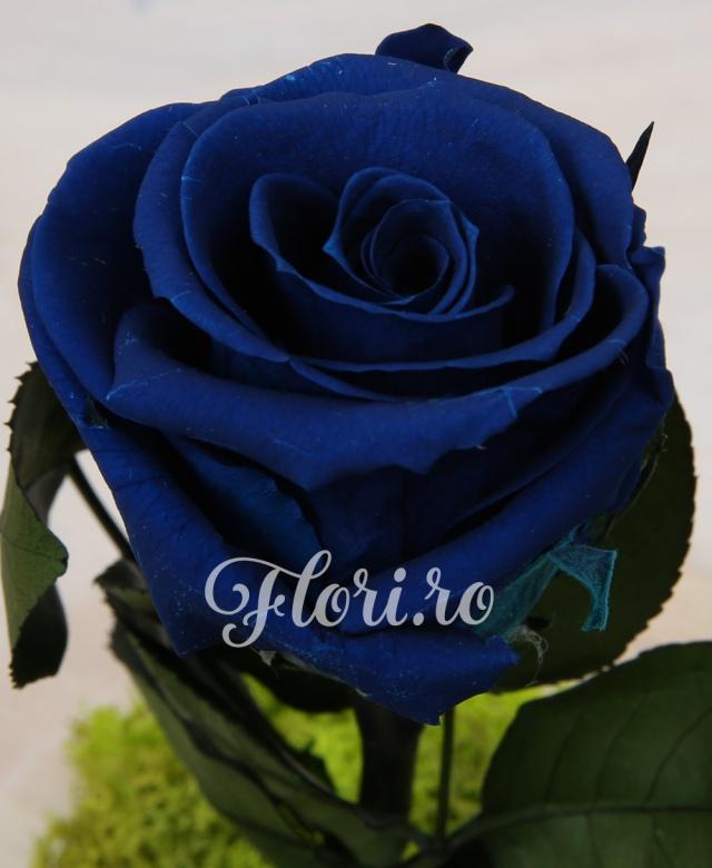 1 trandafiri criogenat albastru ornat cu muschi verde criogenat, cupola de sticlă și suport de lemn