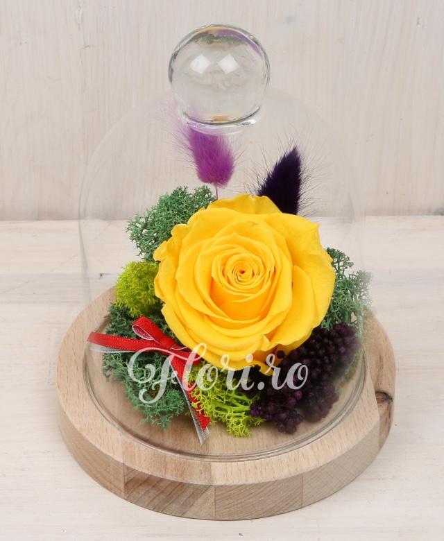 1 trandafir criogenat galben, muschi si alte plate criogenate, cupola de sticlă și suport de lemn