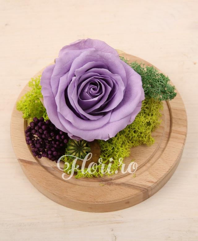 1 trandafir criogenat mov, muschi verde criogenat, cupolă sticlă și suport lemn