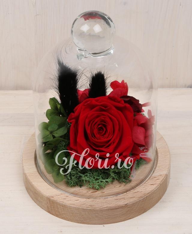 1 trandafir roșu criogenat, hortensia criogenata, cupolă din sticlă pe suport lemn