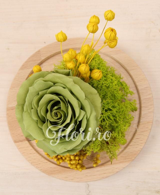 trandafir criogenat verde, muschi verde criogenat, rice flower, cupola sticla pe suport lemn