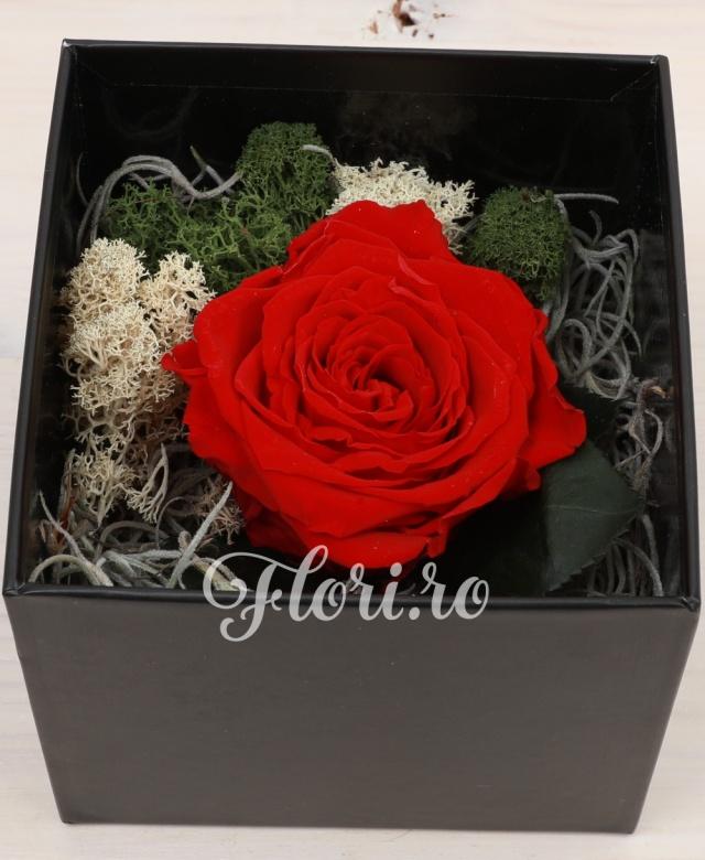 1 trandafir rosu criogenat in cutie patrata