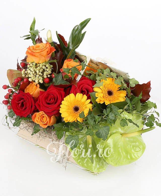 carte, 4 trandafiri portocalii, 3 gerbera portocalie, 3 trandafiri roșii, 2 hypericum roșu, 2 anthurium verde, brunia, phylodendron xanad, bambus, hedera, verdeață