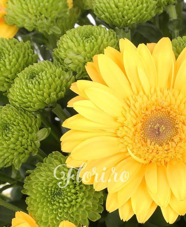 5 trandafiri crem, 11 gerbera galbena, 8 santini verde