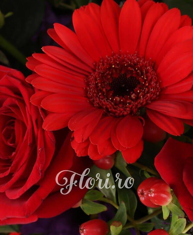 9 trandafiri rosii, 5 gerbera rosie, 5 lisianthus mov, 5 hypericum rosu, 5 trahelium mov