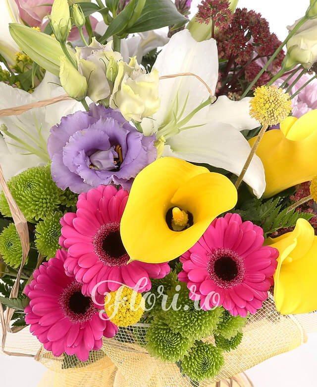 1 crini albi, 3 gerbera ciclam, 3 cale galbene, 2 liatris, 1 cybidium roz, 3 lisianthus mov, 1 crizantema roz, 3 craspedia, 2 kalanchoe, solidago, 2 santini verde